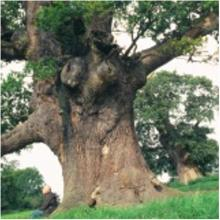Bernwood - discover what living and working in the Forest was like in mediaeval times